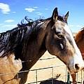 Working Horse by Jim Buchanan