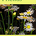 Friends Forever by Tom Gari Gallery-Three-Photography