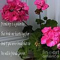 Friendship Is A Golden Tie With Geraniums by Barbara Griffin