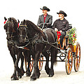 Friesian Carriage by Jenny Gandert