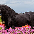 Friesian Fleur by Wes and Dotty Weber