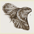 Frilled Lizard by Litz Collection