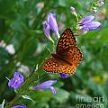 Fritillary Butterfly by Carol Milisen