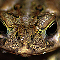 Frog 2 by Optical Playground By MP Ray