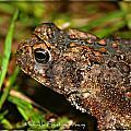 Frog 2 by Michaela Preston