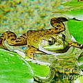 Frog  Abby Aldrich Rockefeller Garden by Lizi Beard-Ward