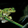Frog And Dragonfly by William Underwood
