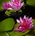 Frog And Water Lily by Randy Pollard