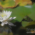 Frog And Water Lily by Smilin Eyes  Treasures