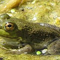 Frog by Eric Noa