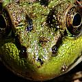 Frog Face by Jes Fritze