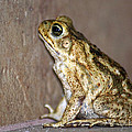 Frog-facing The Wall by Miguel Hernandez