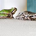 Frog Flatulence - A Case Study