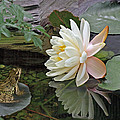 Frog In Awe Of White Water Lily by Gill Billington