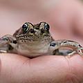 Frog by Jakub Sisak