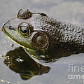 Frog by Joseph Marquis
