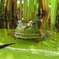 Frog On Lily Pad by Jack Schultz