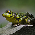 Frog Outcrop by Christina Rollo