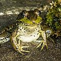 Frog Pose by Richard Kitchen