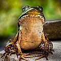 Frog Prince Or So He Thinks by Bob Orsillo