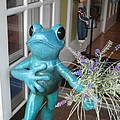 Frog Suitor by Barbara McDevitt