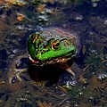 Froggy Smile by Elizabeth Winter
