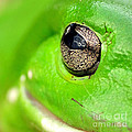 Frog's Eye by Kaye Menner