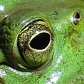 Frog's Eye by MTBobbins Photography
