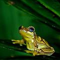 Frogtastic by Trish Tritz