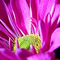 From The Florist Too by Joe Kozlowski