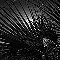 Fronds by George Taylor
