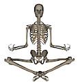 Front View Of Human Skeleton Meditating by Elena Duvernay