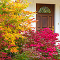 Front Yard Autumn Decor, Quincy California by Tirza Roring