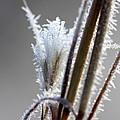 Frost 20131226-115 by Carolyn Fletcher