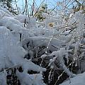 Frost Grass by David S Reynolds