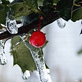 Frosted Holly by Shana Rowe Jackson