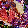 Frosted Leaves #2 - Painted by Nikolyn McDonald