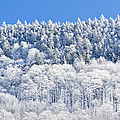Frosted Mountainside by Alan L Graham