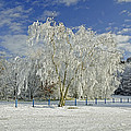 Frosted Trees - Newton Road Park by Rod Johnson