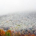 Frosty Fall by Mary Cloninger