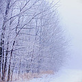 Frosty Forest Frontier - Artistic  by Chris Bordeleau