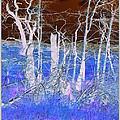 Frosty Forest by Mickey Harkins