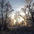 Frosty Morn 3 by Bonfire Photography
