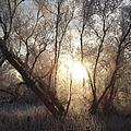 Frosty Morn by Bonfire Photography