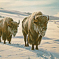 Frosty Morning - Buffalo by Paul Krapf