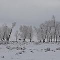 Frosty Morning Tree Line by Gary Benson