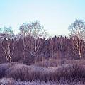 Frosty Purple Morning In Russia by Jenny Rainbow