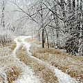 Frosty Trail 2 by Penny Meyers