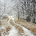 Frosty Trail by Penny Meyers