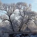 Frosty Trees 4 by Bonfire Photography